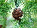 Fiori di Bach, Crab Apple, Elm, Larch, Oak, Pine, Star of bethelhem, Sweet Chestnut, Willow