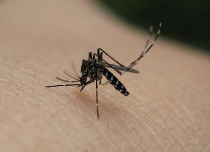 difendersi dalle zanzare