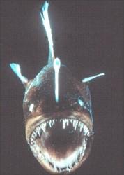 pesci simbolismo