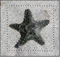 stella1