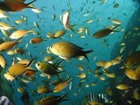 Nuoto subacqueo