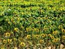 primavera è colore è odore è sapore della vita