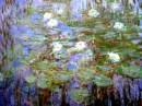 la bellezza delle ninfee di Monet