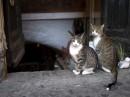 Amici felini nei vicoli di Roma