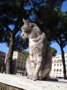 I gatti di Torre Argentina