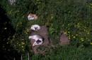 Gatti riposano a Largo di Torre Argentina