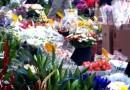 Il mercato di Campo de' Fiori anche in inverno è un tripudio di fiori