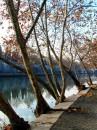 Inverno i platani spogli tendono i loro rami sul fiume Tevere