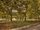 Roma Via Brunelleschi e le ultime foglie è arrivato l'inverno