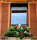 Fiori alla finestra in via Condotti