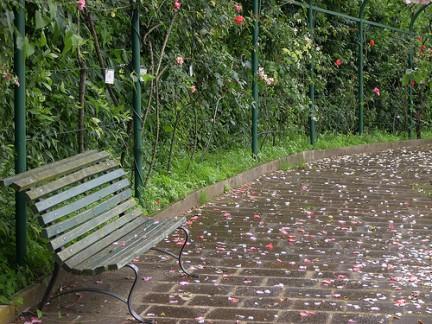 I petali di rosa hanno fatto un tappeto di colori