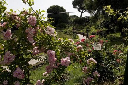 Tripudio di rose
