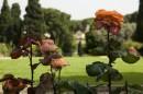 Le Rose nei Viali del Roseto Comunale