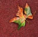 E i ricordi dell'ottobre romano proseguono nelle foglie cadute