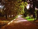 Ottobre romano in un viale cadono le foglie