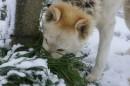 Sapore di neve
