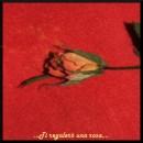 Una rosa nel giorno degli innamorati