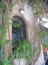 In ottobre una finestra a Trastevere mostra il suo verde