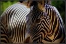 Uno Zoo per grandi e piccini