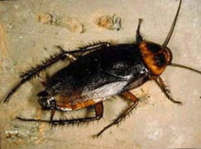 Lo scarafaggio nei sogni - Invasione di formiche in cucina ...