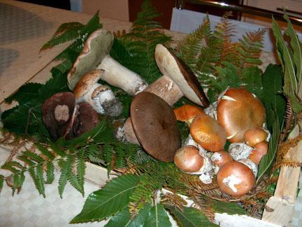 Sagra dei Funghi a Castelbuono