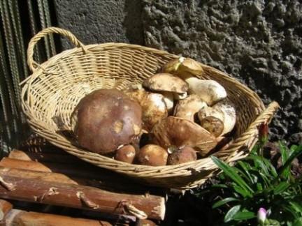 Mostra e Sagra dei Funghi a Ucria