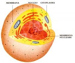 scheda didattica: la cellula