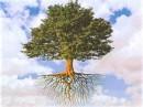 Foto di alberi,