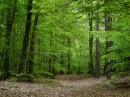 Foto di boschi e foreste