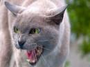 Foto di gatti