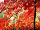 frutti autunnali, halloween, ottobre