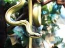 Immagini di serpenti verdi, immagini di serpenti nei sogni