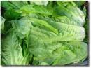 immagini di insalata