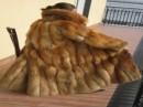 foto di pellicce