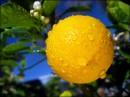 Limoni e pompelmi