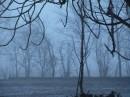foto  con la nebbia