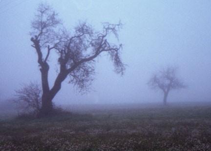 novembre nebbia