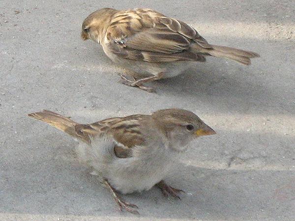Foto di passerotti