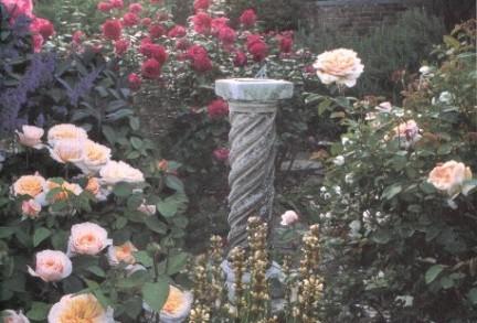 rose rosai