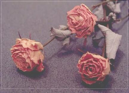rose appassite poesia pessoa