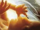 Immagini del feto in diverse fasi di sviluppo