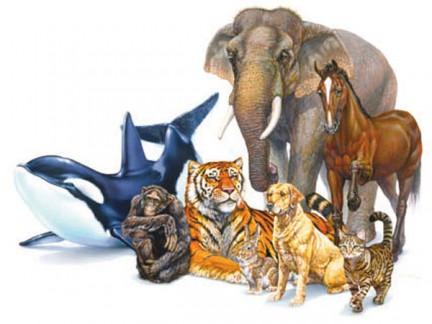 Animali nei sogni