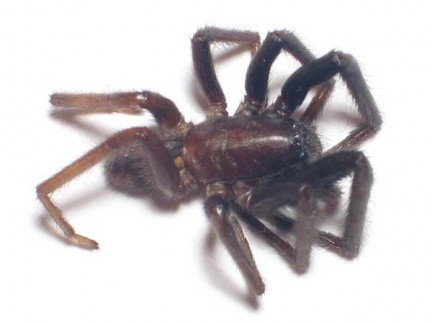 Il ragno nei sogni