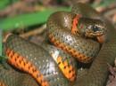 Il serpente nei sogni