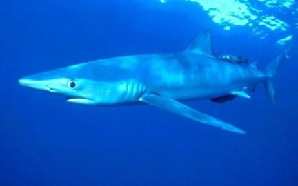 squalo sogni