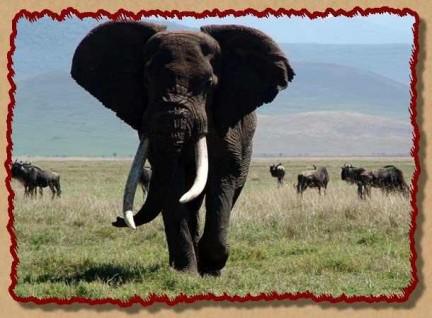la maestosità dell'elefante