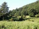 Il bosco di Bottaccio e lo stagno Gallinaccio