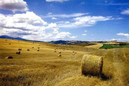 Fieno Toscana