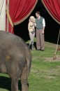 Water for elephants: foto dal set, gennaio