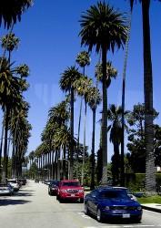 Un viale alberato in Beverly Hills